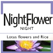 NightFlower nattcremer